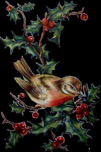 Oiseau sur houx